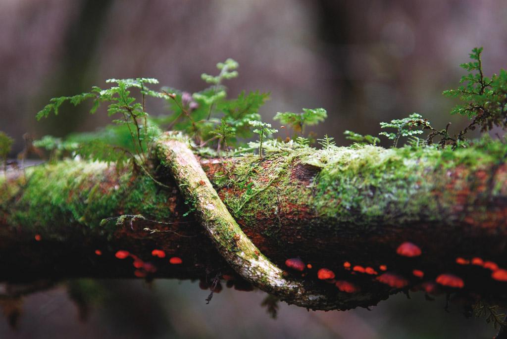 bosque-2